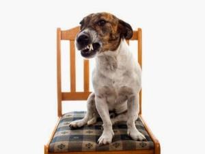 perros-gruñidos