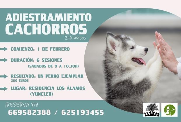 adiestramiento, cachorros, educación canina, perros