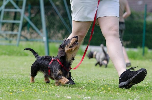 adiestramiento-canino-residencia