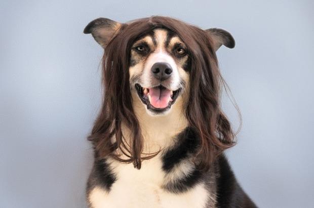 perro-peluqueria